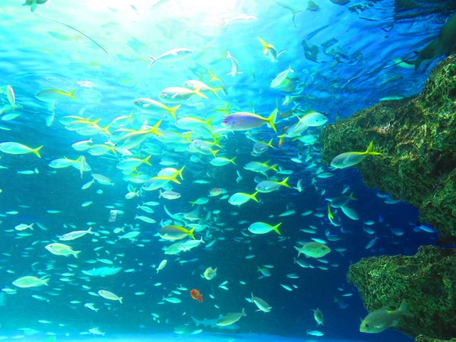 【環境トピックス】世界最南端のサンゴ礁に白化現象