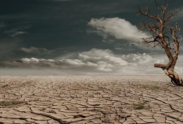 【環境トピックス】ブラジルのアマゾン、伐採面積が大幅に増加